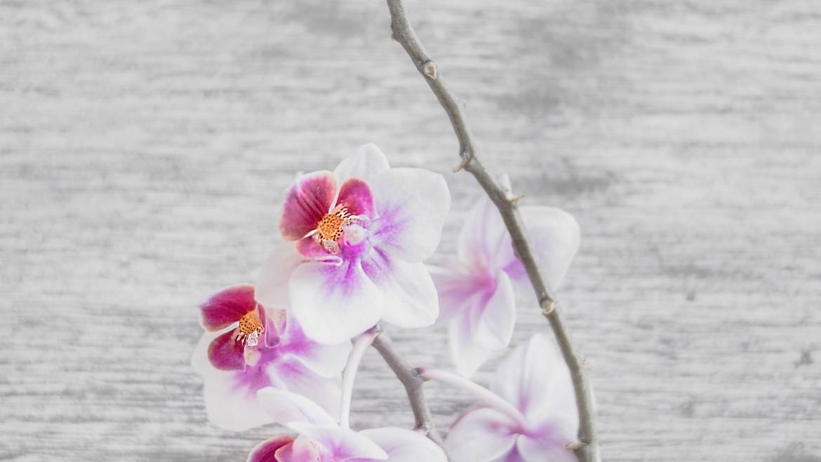 Keeping Orchids Alive: The 3 MUST DO'S To Survive